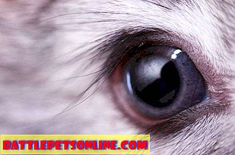 Red Eye In Rabbits Explained